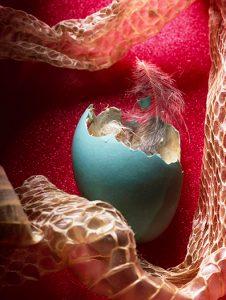 eggfeathersnakeskin