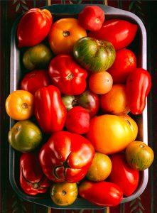 tomato-study_0