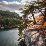 pitchpines draping over cliff edge above Mohonk Lake